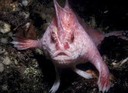pez rosado con manos