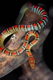 serpiente voladora con bandas